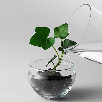 Grow small 2