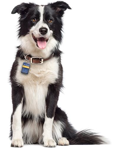 Nyckelbricka hund